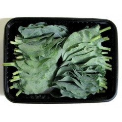 Oyster leaves 50 pieces
