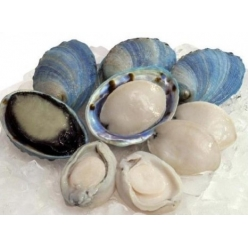 Frozen blue abalone 15 pieces