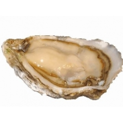 Ancelin Oyster no.3 - 24 pcs.