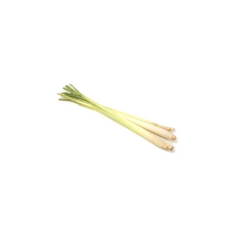 Lemon Grass radice 100 gr