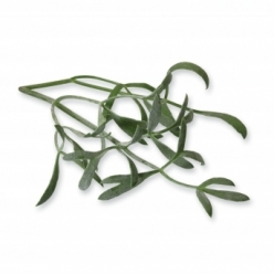 Sea Fennel 100 pieces in 2...