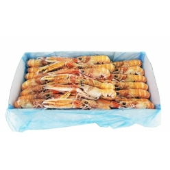 Shell fish  2 kg suitable...