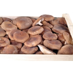Fresh Shiitake mushrooms kg...