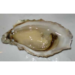 Oyster Goulois 2 kg - size n.3