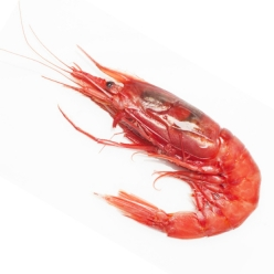 Red shrimp 1 kg (big size...