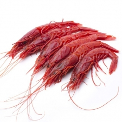 Carabineros shrims fished...