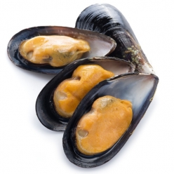 Wild Mussel from Adriatic...